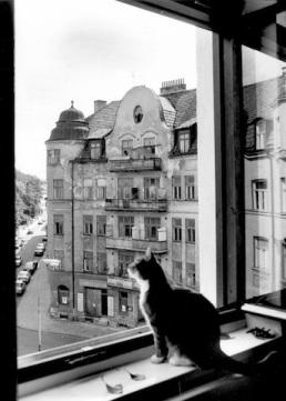 Katt i fönster i hus på Södra Parkgatan i Malmö